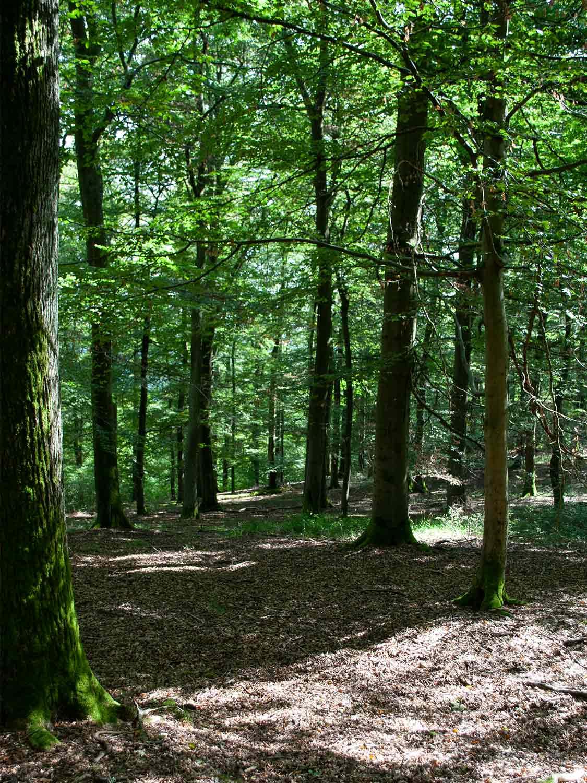 Buchenwald Edersee Nationalpark Kellerwald Edersee 1500x1125 1 - günstige Ferienwohnungen 200m bis Nationalpark Kellerwald-Edersee