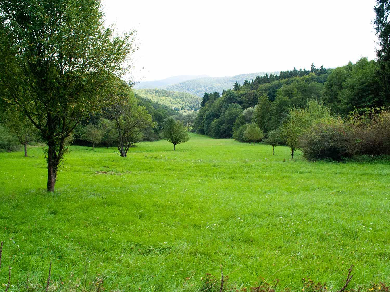Nationalpark Kellerwald Edersee2 1500x1125 1 - günstige Ferienwohnungen 200m bis Nationalpark Kellerwald-Edersee
