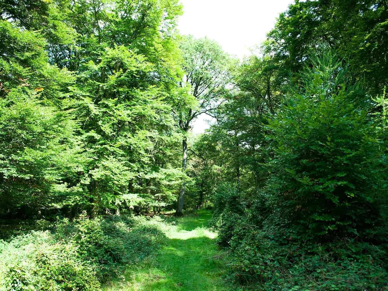 Urwald Nationalpark Kellerwald Edersee2 1500x1125 1 - günstige Ferienwohnungen 200m bis Nationalpark Kellerwald-Edersee