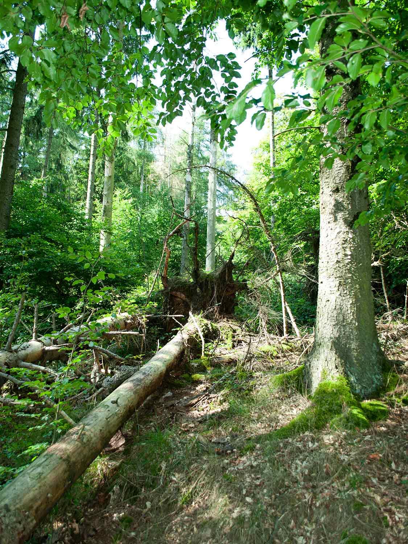 Urwald3 Nationalpark Kellerwald Edersee2 1500x1125 1 - günstige Ferienwohnungen 200m bis Nationalpark Kellerwald-Edersee