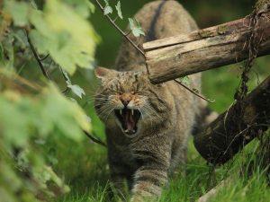 Wildtierpark Edersee 300x225 - Vergünstigungen durch MeineCardPlus